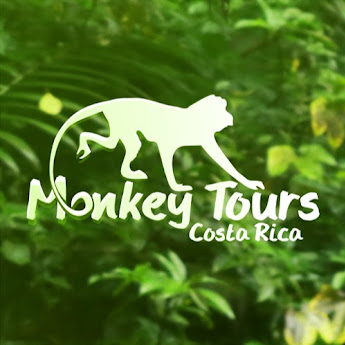 Costa Rica Monkey Tours image